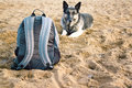 Dog guarding well trained shepherd watching out a sack on the beach outdoor shot concept of safety Royalty Free Stock Photo