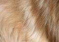 Perro cabello