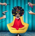 Dog  at hairdressers salon Royalty Free Stock Photo