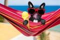 Dog on hammock and ice cream Royalty Free Stock Photo
