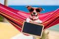 Dog on hammock in summer Royalty Free Stock Photo