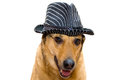 Dog in a hat Stock Photography