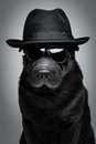 Dog in hat and sunglasses Royalty Free Stock Photo