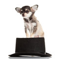 Dog And Hat On White Background