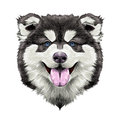 Dog head symmetry sketch vector graphics