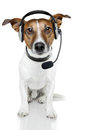 Dog with headset Royalty Free Stock Photo