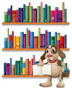 A dog holding a book in front of the bookshelves Royalty Free Stock Photo