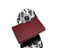 Dog holding a book in his mouth Royalty Free Stock Photo