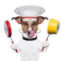 Dog holding colorful pot pan Stock Photo