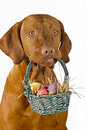 Dog holding easter basket Royalty Free Stock Photo