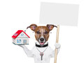 Dog holding an empty placard with a house and a key Stock Image