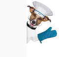 Dog holding empty placard waving Royalty Free Stock Photos