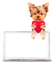 Dog holding heart with �omputer valentine puppy Stock Image