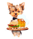Dog holding service tray with food and drink beer hamburger Stock Photography