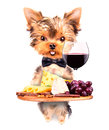 Dog holding service tray with food and drink wine bread cheese grapes Stock Photography