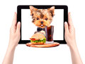 Dog holding tray with food on a tablet service and drink screen Stock Images