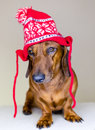 Dog in holiday's hat Stock Photo
