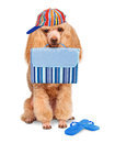 Dog holidays at sea isolated on white Royalty Free Stock Photography