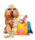 Dog. Holidays at sea. Royalty Free Stock Photo