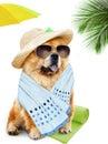 Dog holidays at sea isolated on white Stock Photography