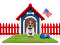 Dog house in with american flag and bowl full of food Stock Image