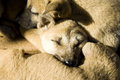 Dog hug lovely dogs hugs cute Royalty Free Stock Photos