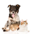Dog Hugging Cat. Isolated On W...