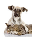 The dog hugs a cat isolated on white background Royalty Free Stock Photo