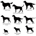 Dog icon set gun dogs illustration silhouette collection of gundog Royalty Free Stock Photography