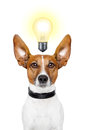 Dog idea Royalty Free Stock Photos