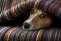 Dog ill or sleeping jack russell under the blanket in bed the bedroom sick tired sheet covering its head Stock Images