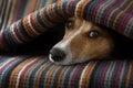 Dog ill or sleeping Royalty Free Stock Photo