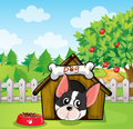 A dog inside a dog house at a backyard with an apple tree illustration of Stock Image