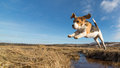 A dog jumping over water