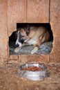 Dog in kennel Royalty Free Stock Image