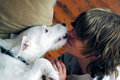 Dog kisses Stock Images
