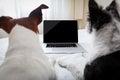 Pes prenosný počítač