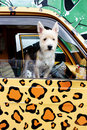 Dog leaning out of a truck window Royalty Free Stock Photo