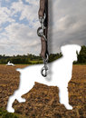Dog of the leash illustration composit a gone in front a nature scene Royalty Free Stock Images