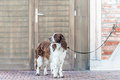 Dog leashed outside building Stock Photography