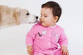 Dog licking baby face over white background Stock Image