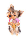 Dog licking with ice cream Royalty Free Stock Photo