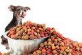 Dog licks looking at dog food Royalty Free Stock Images