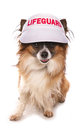 Dog lifeguard Royalty Free Stock Photo