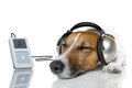 Dog listen to music Stock Photo