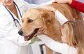 Pes a malý na domáce zvieratá klinika