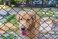 Dog lock down in cage cute dogs of park Stock Photography