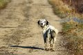 Dog Looking Back
