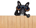 Dog looking through binoculars searching and observing with care above a wood fence Royalty Free Stock Photography