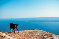 Dog looking at sea alone on the top of mountain Royalty Free Stock Image